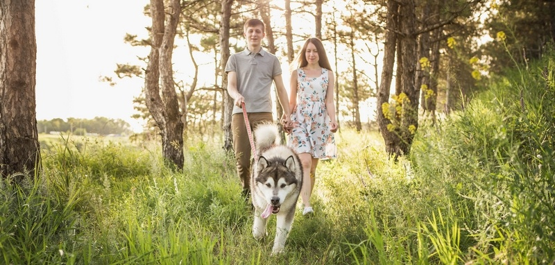 Beskyt dig selv og din hund mod flåter